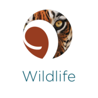 RESEARCH WILDLIFE TRADE