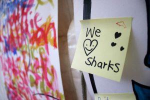 We-Love-Sharks