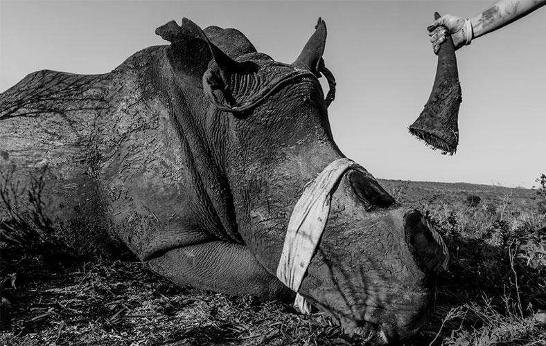 PHOTOGRAPHERS AGAINST WILDLIFE CRIME (TM)